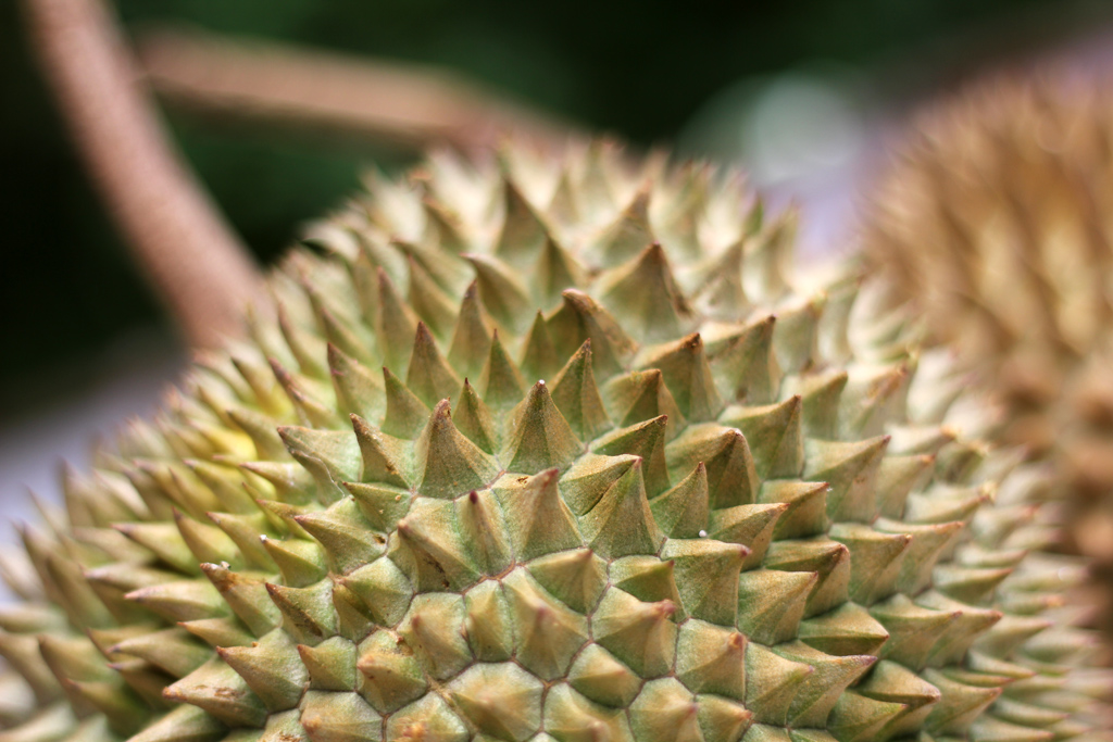 Our spiky friend!