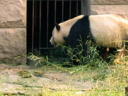 Zoo Pekin