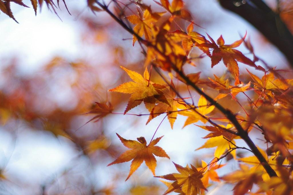 即使錯過了楓紅,京都依然令人神迷