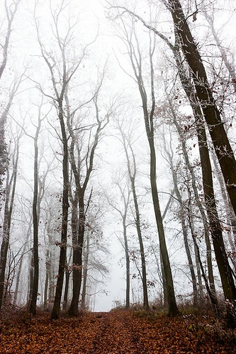 trees winter brown mist tree 20d leaves vertical misty forest canon landscape eos hungary fallen