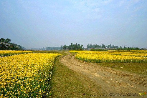 Landscape of Beautiful Bangladesh.