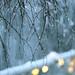 Snow, Lights, Branches by Gordana AM