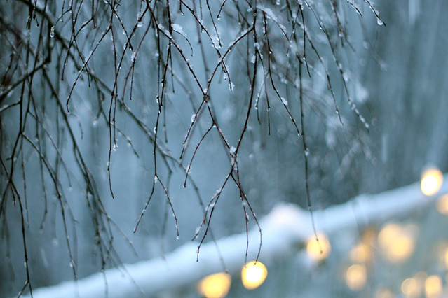 Snow, Lights, Branches