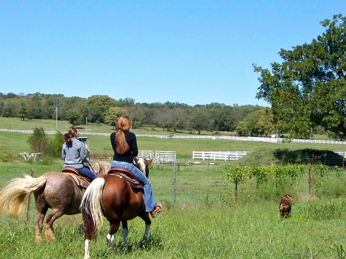 horse farm tennessee riding horseback shelbyville clearview