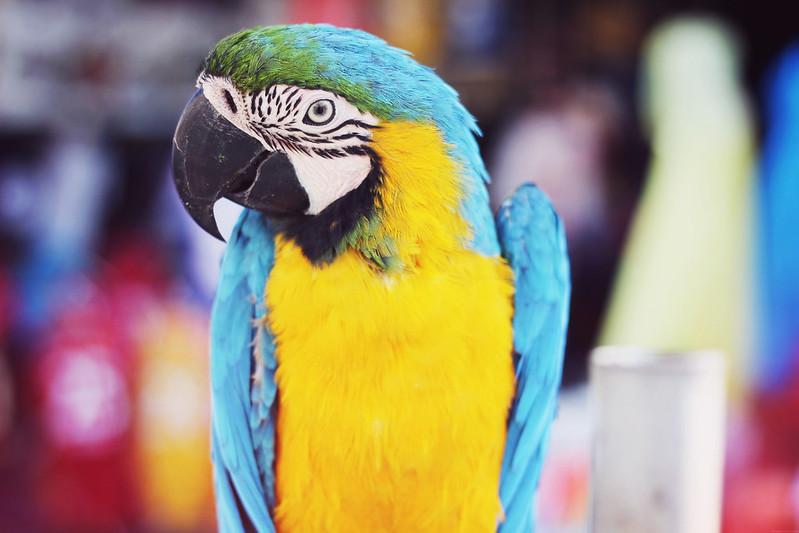 papageiiiiii