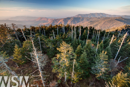 sunset mountains tower nature landscape view hiking tennessee peak northcarolina tourist hike pines evergreens smokies clingmansdome appalachiantrail smokeymountains at