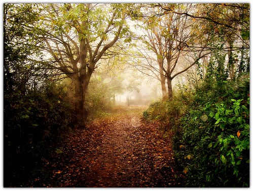 Autumn along the path..1
