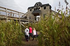 20121007 - Davis Corn Maze