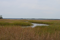 steppe(0.0), tundra(0.0), mudflat(0.0), coast(0.0), fen(1.0), wetland(1.0), prairie(1.0), horizon(1.0), polder(1.0), ecoregion(1.0), field(1.0), grass(1.0), plain(1.0), natural environment(1.0), shore(1.0), meadow(1.0), salt marsh(1.0), rural area(1.0), savanna(1.0), grassland(1.0), bog(1.0),