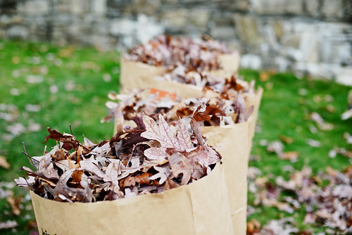 Bags of leaves as far as the eye can see.