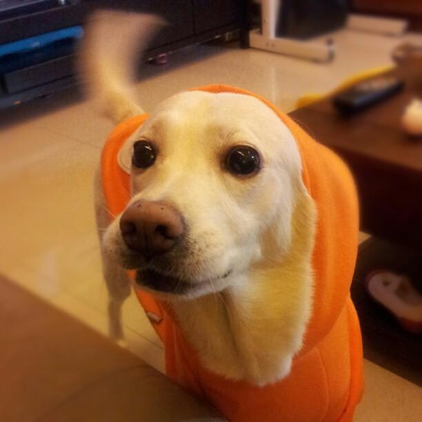 20121113 小橘帽。