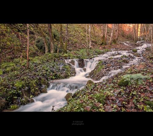 switzerland eau suisse suiza lumière rivière morte jura foret feuille poselongue nikond90 mygearandme