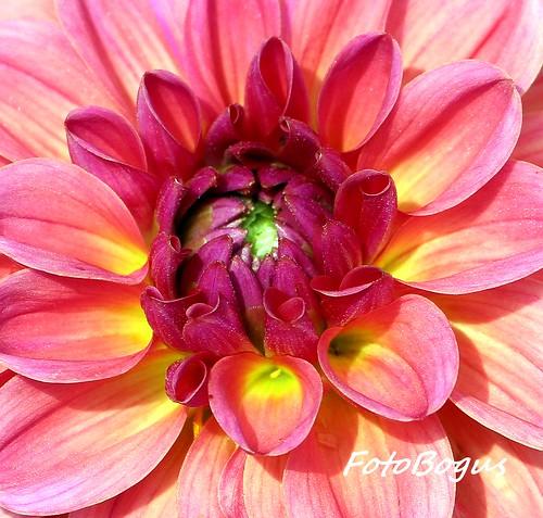 FLOWERS 22.08.2012 018