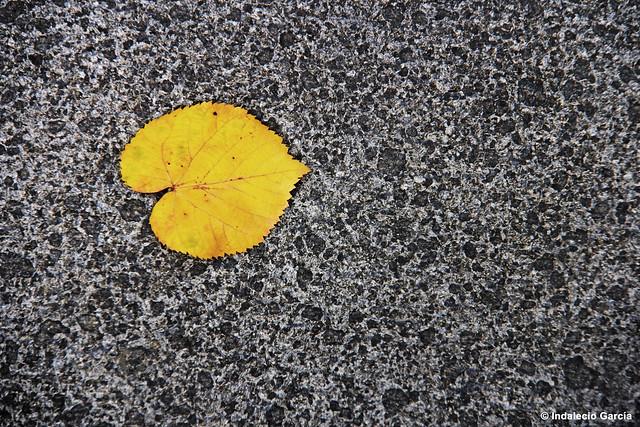 hoja amarilla