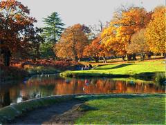 Bradgate Park - Leicestershire