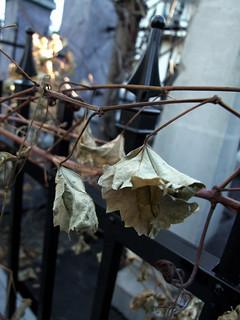 dead leaves 003.