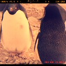 Penguin Project 2012/13