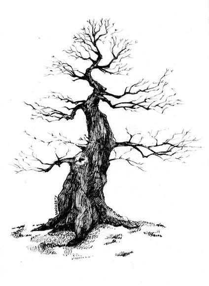 bonsaiweb