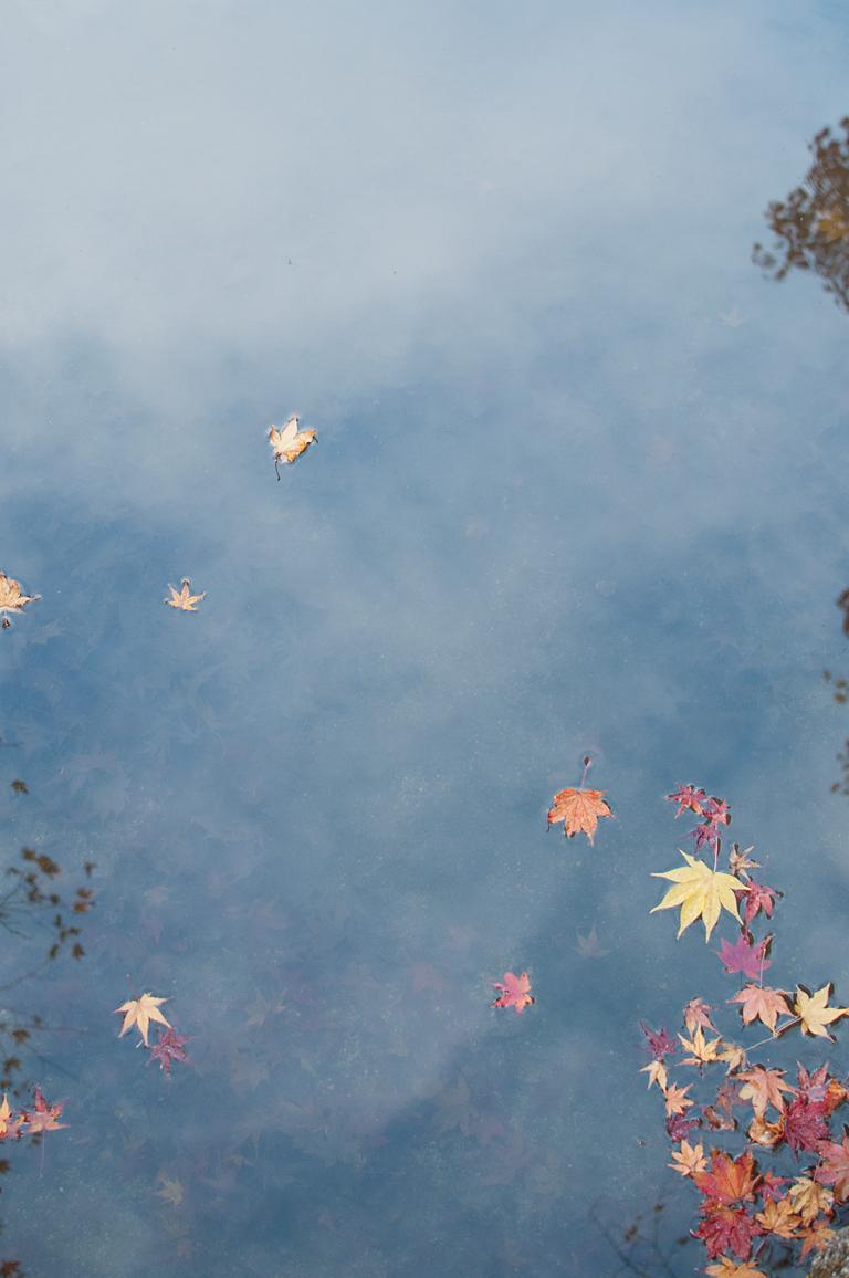空に浮かび散る秋の星|圓光寺