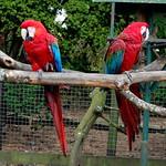 Llandudno trip and Welsh Mountain Zoo