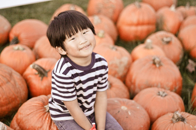 pumpkin patch_-35