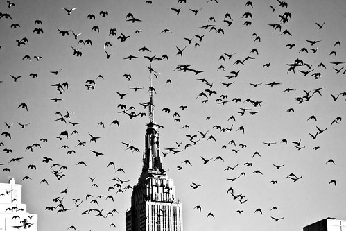 Empire State Bird-ing