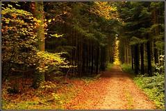 Forêt de Bellmund