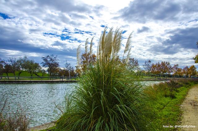 Imagen Parque Juan Carlos I - LXVI