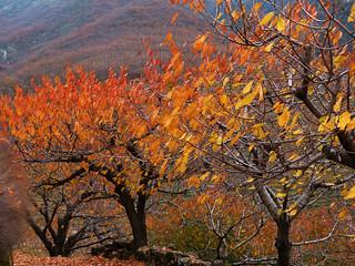 Fotografía del otoño en el Valle del Jerte (Extremadura)