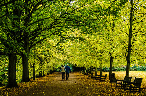 [フリー画像素材] 人物, カップル, 中年・高齢者, 人物 - 後ろ姿, 人物 - 樹木, 並木道 ID:201212021600