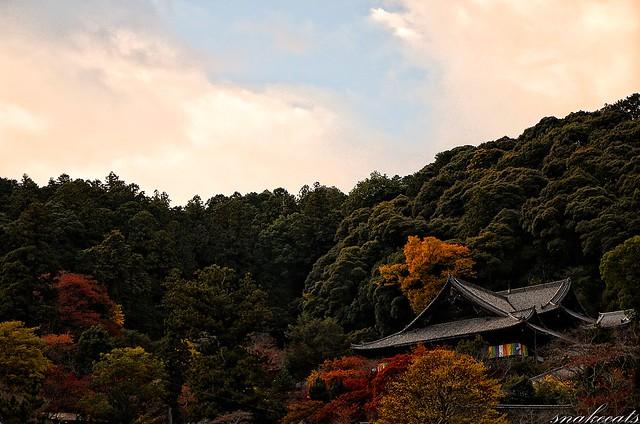 「秋に抱かれる」 長谷寺 - 奈良