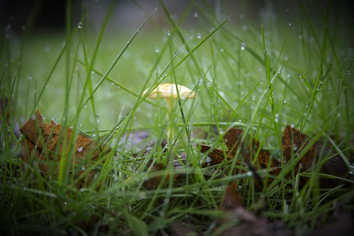 Mushroom in the grass by The Bacher Family