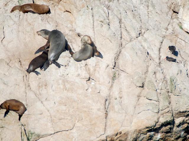 bloy sea lions_0273
