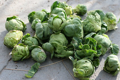 brussels sprouts 023