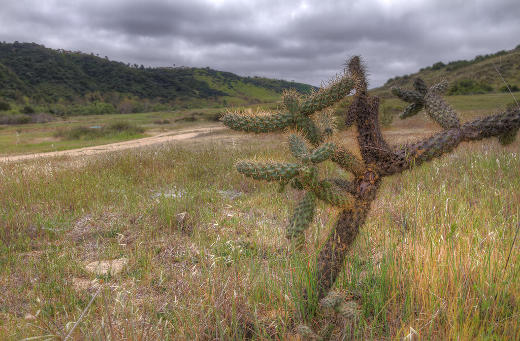Lone Cactus in the Hills