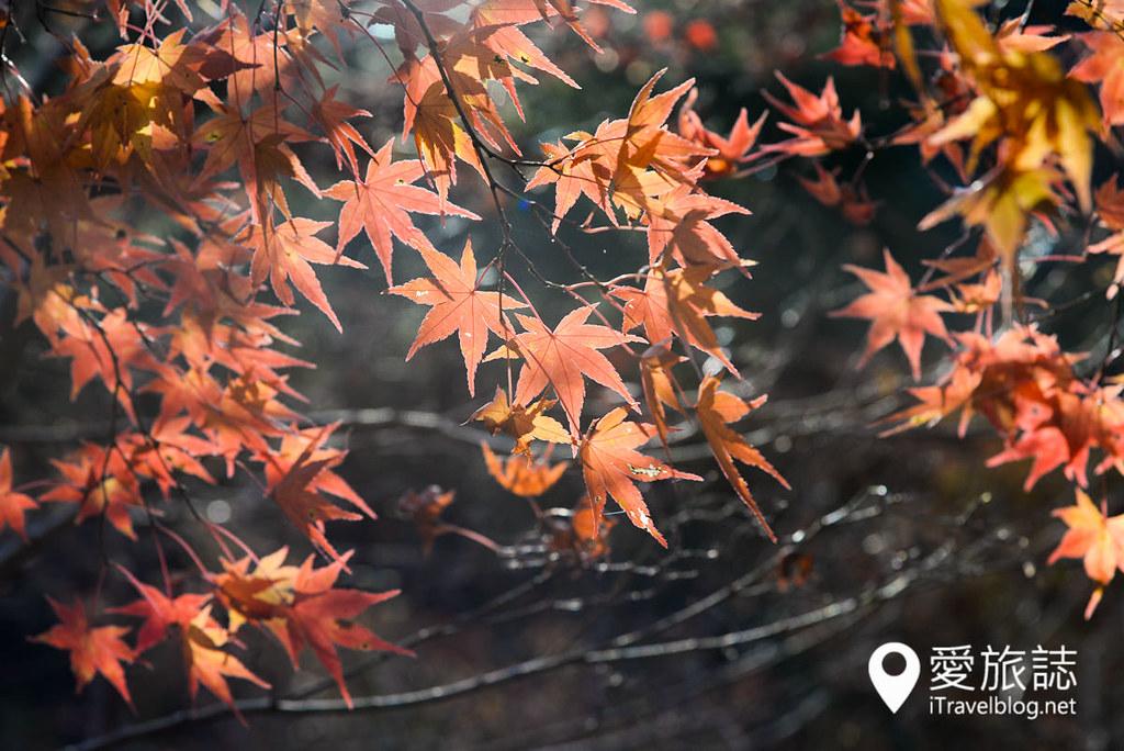 京都赏枫景点 高雄西明寺 32
