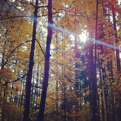 Fall Photo of the Day: Spencer Butte, Eugene