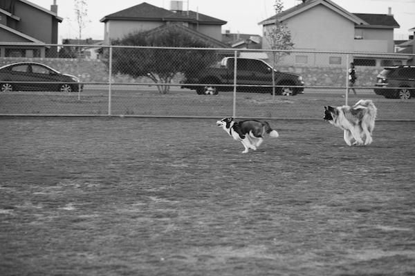 jaxharmon_dogpark_27