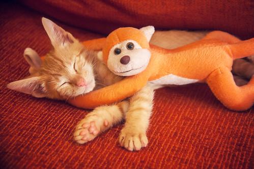 Fiumi y su mascota