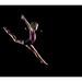 Gymnastics by Vincent Riemersma