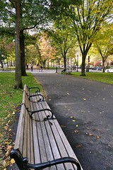 Commonwealth Avenue Mall: Bench
