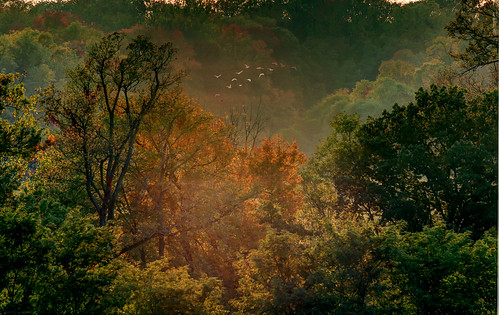 autumn trees ohio fall colors forest woodland evening woods glow cincinnati backlighting woodlawn glenwoodgardens nearlysunset
