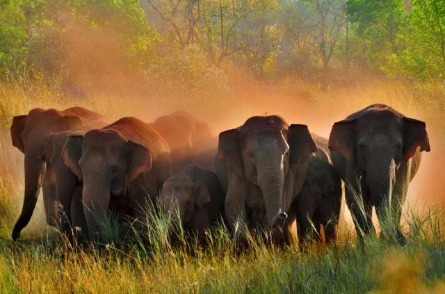 Where The Elephant Rules by Subhojyoti Kanjilal, West Bengal, India