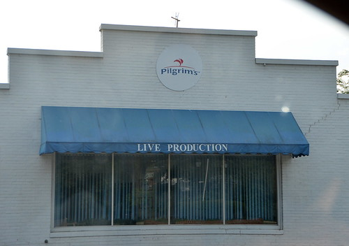 Pilgrim's Live Production