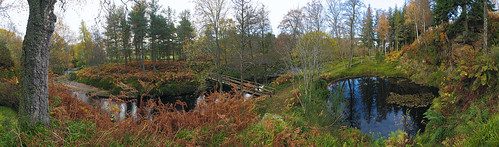 wood bridge autumn trees panorama water leaves scotland footbridge pano panoramic glen viaduct bark leafs morayshire riverdivie divieviaduct slϋeωãvε microsoftice edinkillieviaduct edinkillie edinkillierailwayviaduct