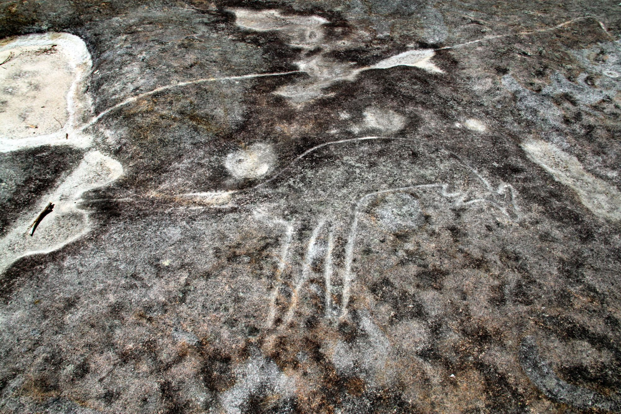 Dharawal rock engravings aboriginal carving of