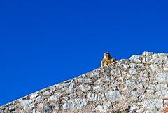monkey sky wall.