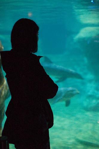 Katrina with Dolphins