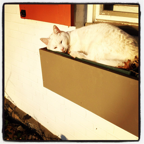 windowbox-cat