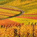 Curve in Autumn Vineyards by Habub3